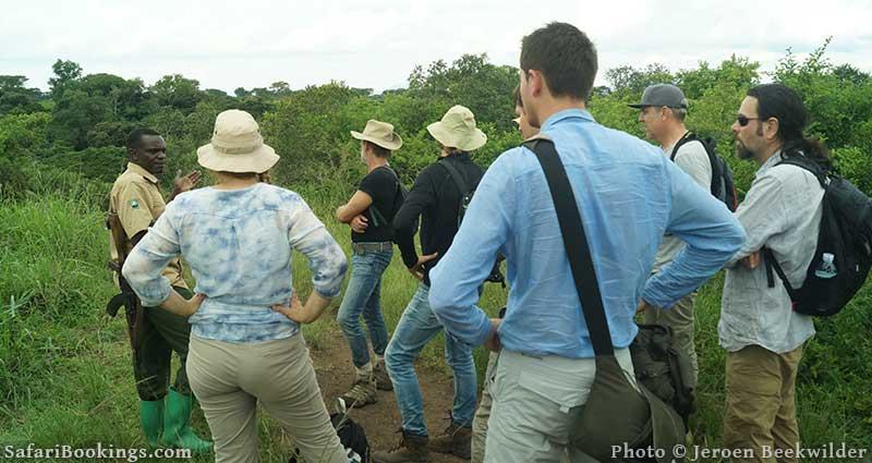 Chimpanzee tracking guide at Kyambura Gorge in Uganda