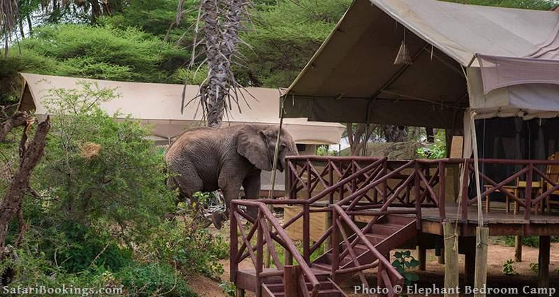 Best Kenya Safari Camp - Elephant Bedroom Camp
