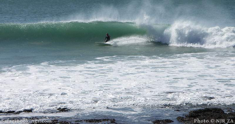 Surfing at J-Bay in South Africa