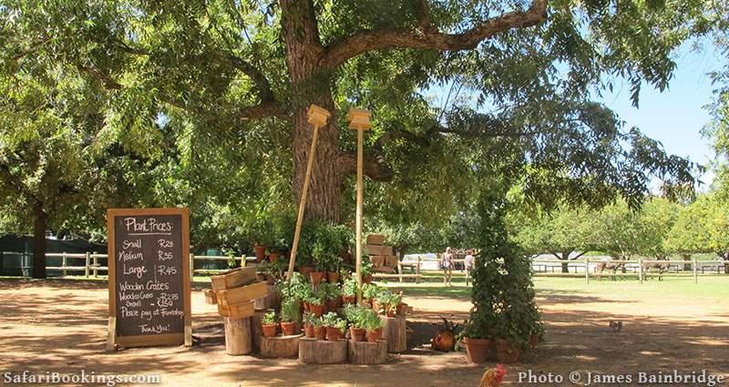 Rustic scene on Babylonstoren Wine Farm