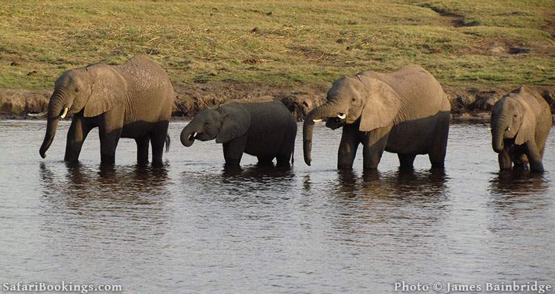 Elephants at the Zambezi