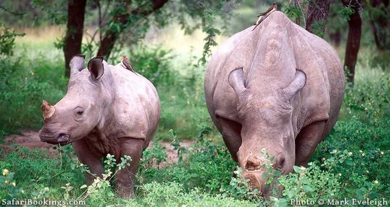 Rhinos in Hwange National Park, Zimbabwe