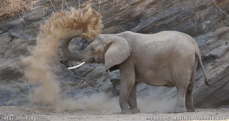 Damaraland Elephant, Namibia