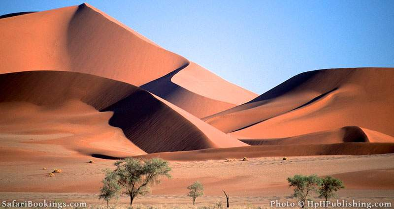 Sand dunes in Namib Naukluft National Park, namibia