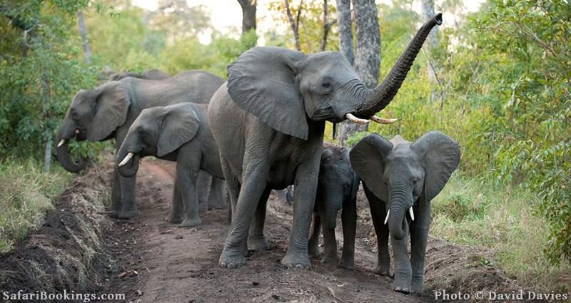 Elephant herd at Majete Wildlife Reserve, Malawi