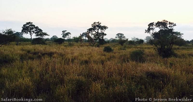 Walking in Kruger National Park, South Africa