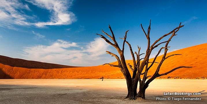 Dead tree on saltpan in Deadvlei, Sossusvlei, Namib Naukluft National Park in Namibia
