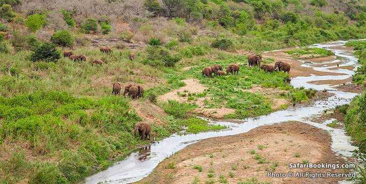Elephants at a river at iSimangaliso Wetland Park, South Africa