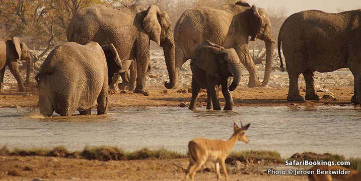 Wildlife at a waterhole at Etosha National Park, Namibia