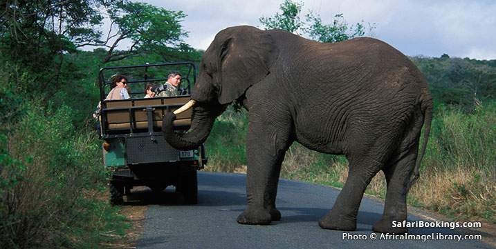 Safari-goers watching an elephant crossing the road at Hluhluwe Imfolozi GR