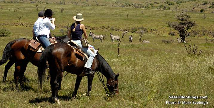 Horseback riding safari