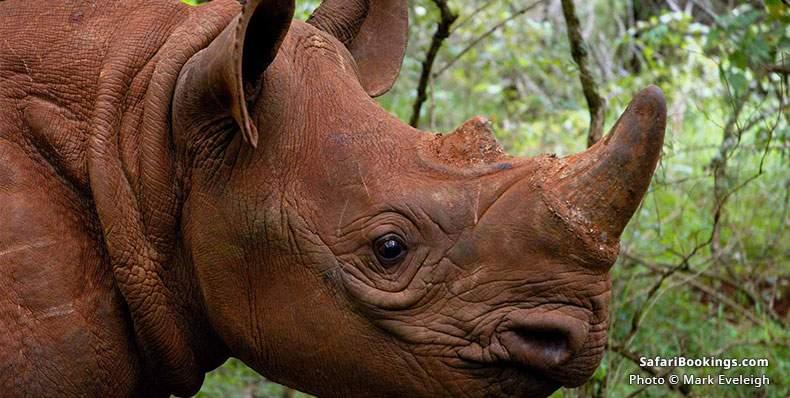 Rhinoceros at Nairobi National Park