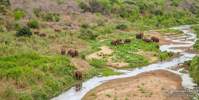 Elephants at iSimangaliso Wetland Park