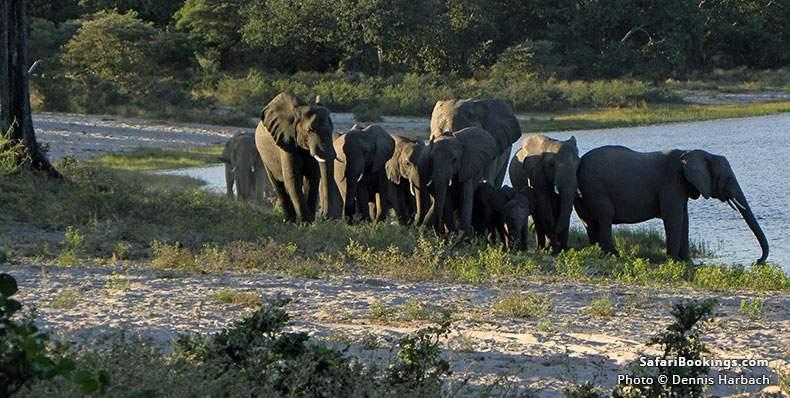 Herd of elephants at Bwabwata