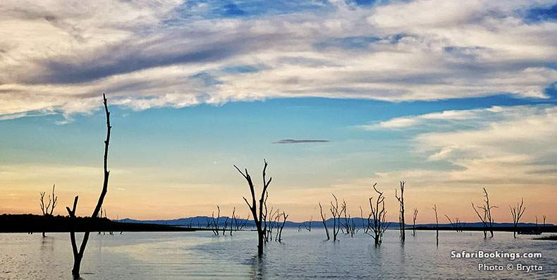 Dead trees standing in the man-made lake