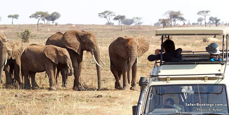 Travelers looking at elephants at Tarangire National Park