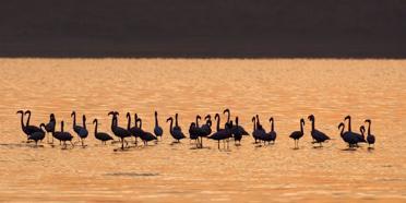 Abijatta-Shalla National Park