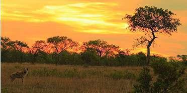 Inyati Game Reserve