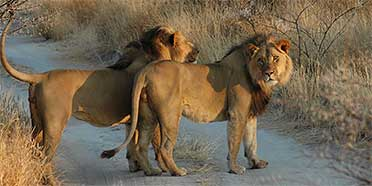 Central Kalahari Game Reserve