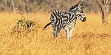 Kuti Wildlife Reserve