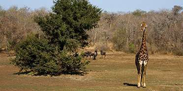 Makalali Game Reserve
