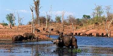 Matusadona National Park