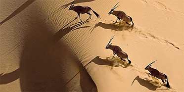 Top Rated Safari Tour Operators: Namibia