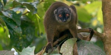 Nosy Mangabe Special Reserve
