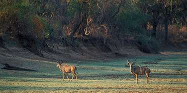 Sioma Ngwezi National Park