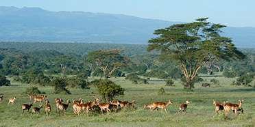 Solio Ranch