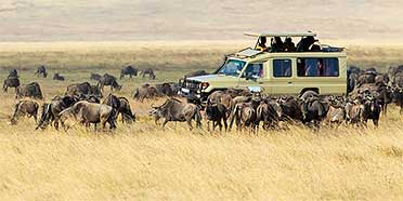 Top Rated Safari Tour Operators