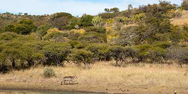 Weenen Game Reserve
