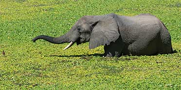 Top Rated Safari Tour Operators: Zambia