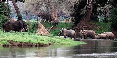Top Rated Safari Tour Operators: Zimbabwe