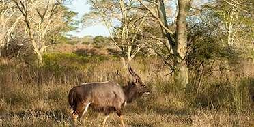 Zulu Nyala Game Reserve