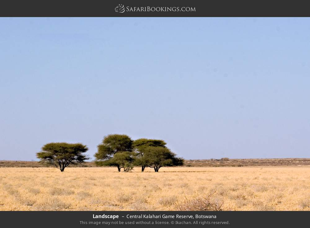 Landscape in Central Kalahari Game Reserve, Botswana