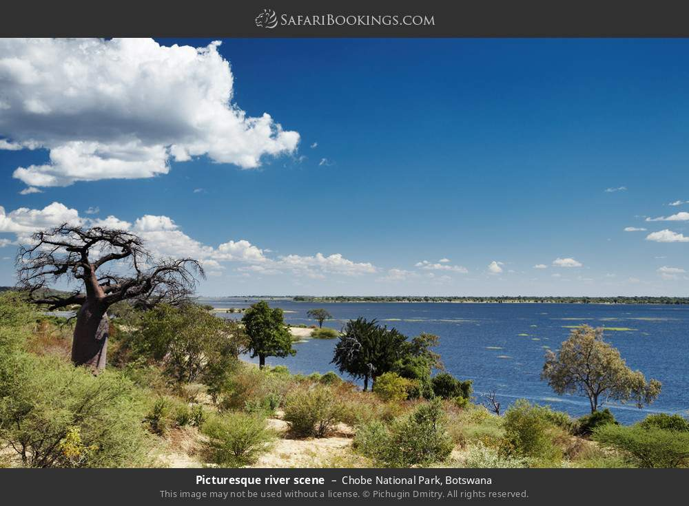 Picturesque river scene in Chobe National Park, Botswana