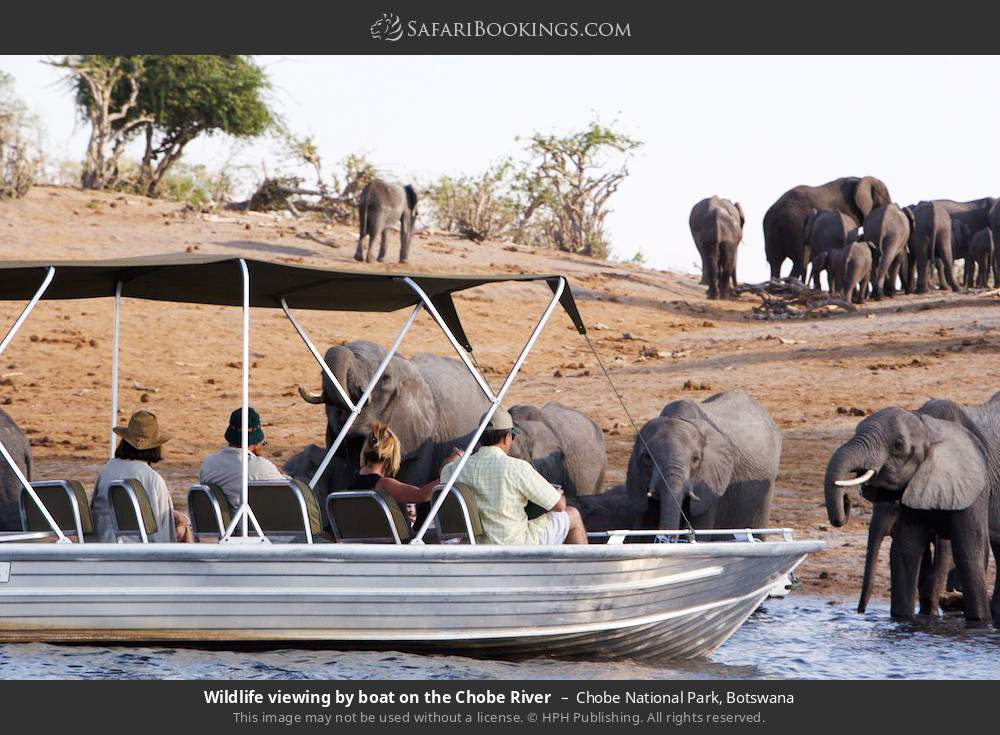 Game viewing by boat on the Chobe river in Chobe National Park, Botswana