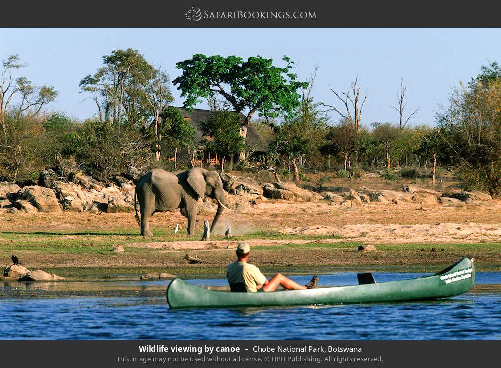 Game viewing by canoe in Chobe National Park, Botswana