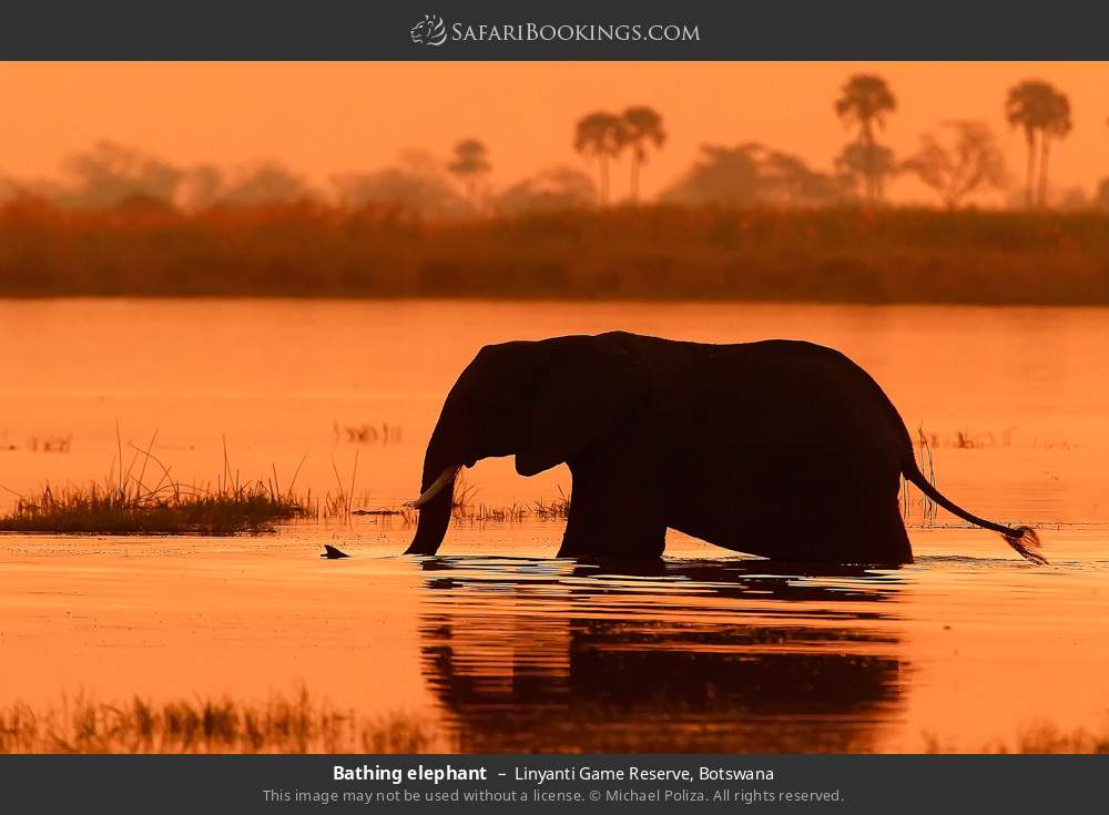 Bathing elephant in Linyanti Game Reserve, Botswana