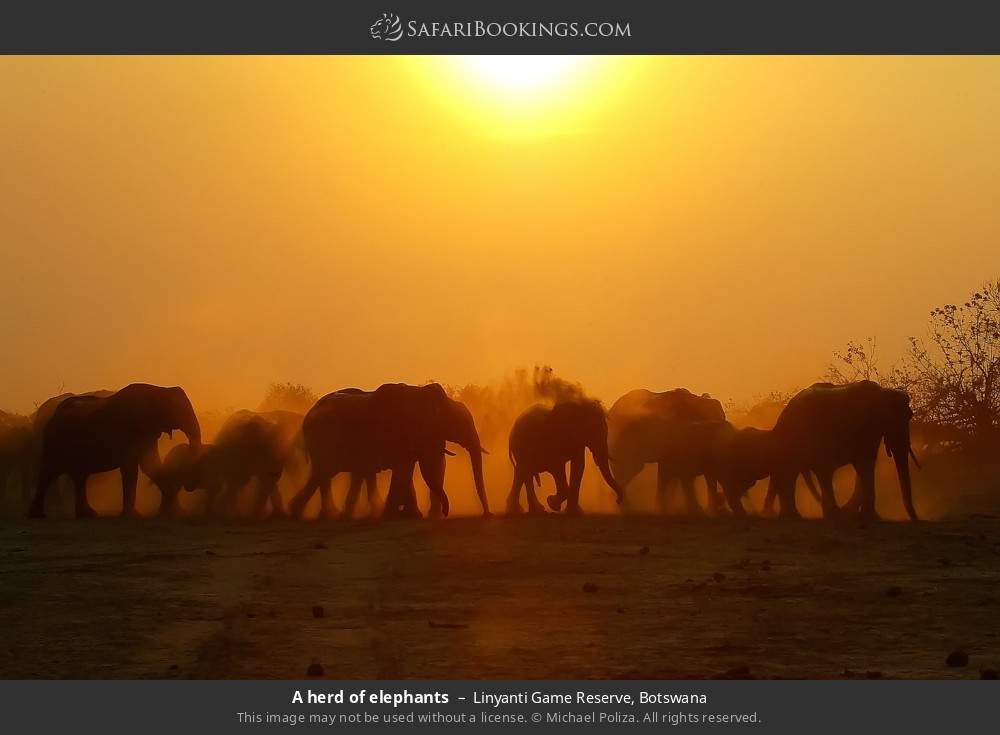 A herd of elephants in Linyanti Game Reserve, Botswana