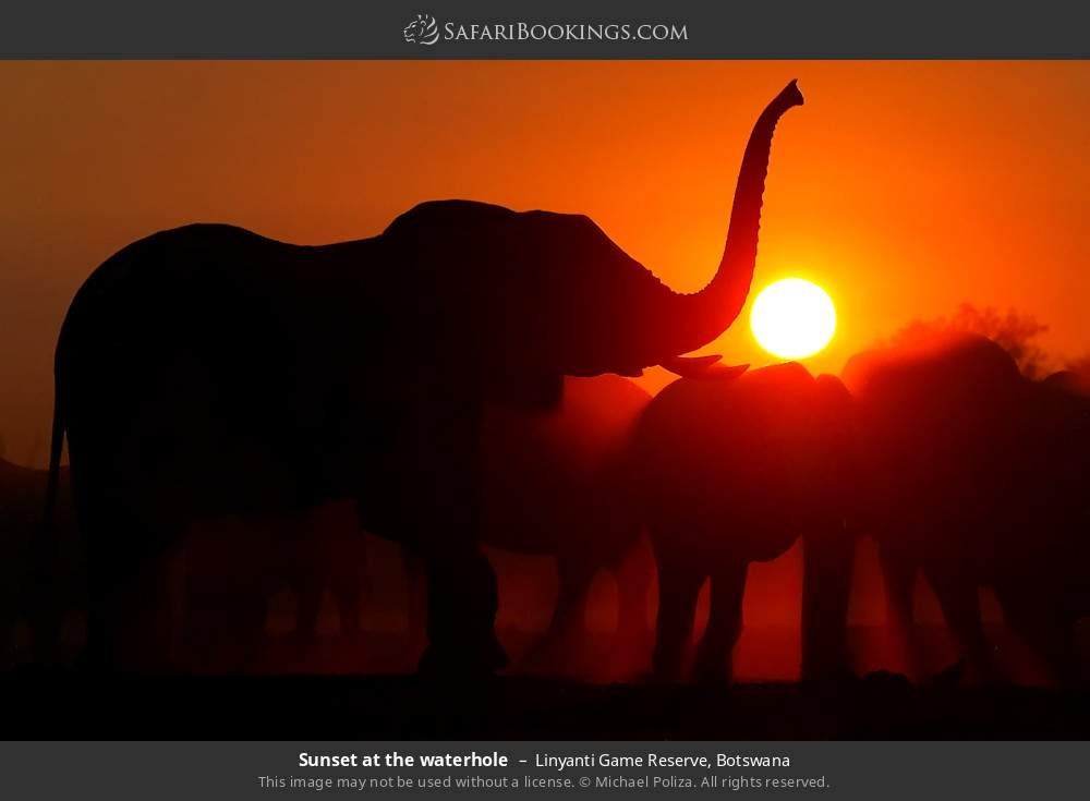 Sunset at the waterhole in Linyanti Game Reserve, Botswana