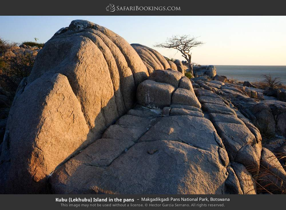 Lekhubu island in the pans in Makgadikgadi Pans National Park, Botswana