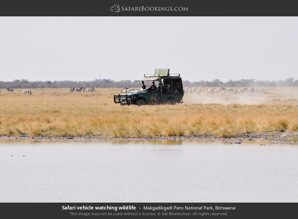 Safari vehicle watching wildlife in Makgadikgadi Pans National Park, Botswana