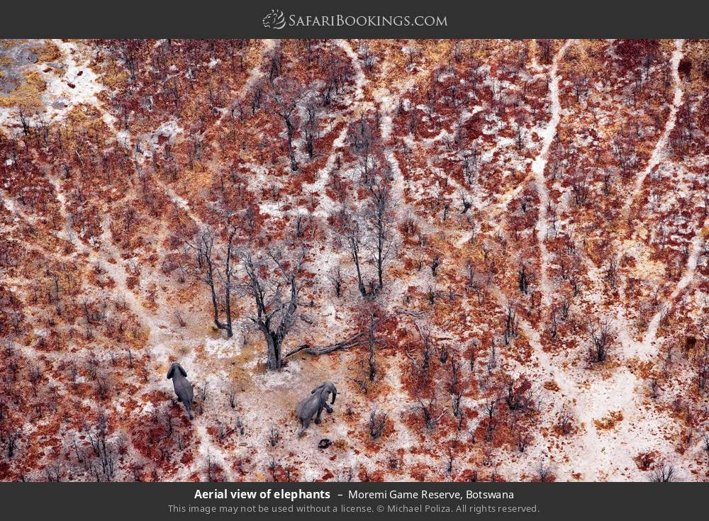 Aerial view of elephants in Moremi Game Reserve, Botswana