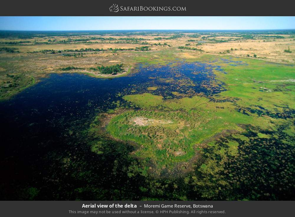 Aerial view of the delta in Moremi Game Reserve, Botswana