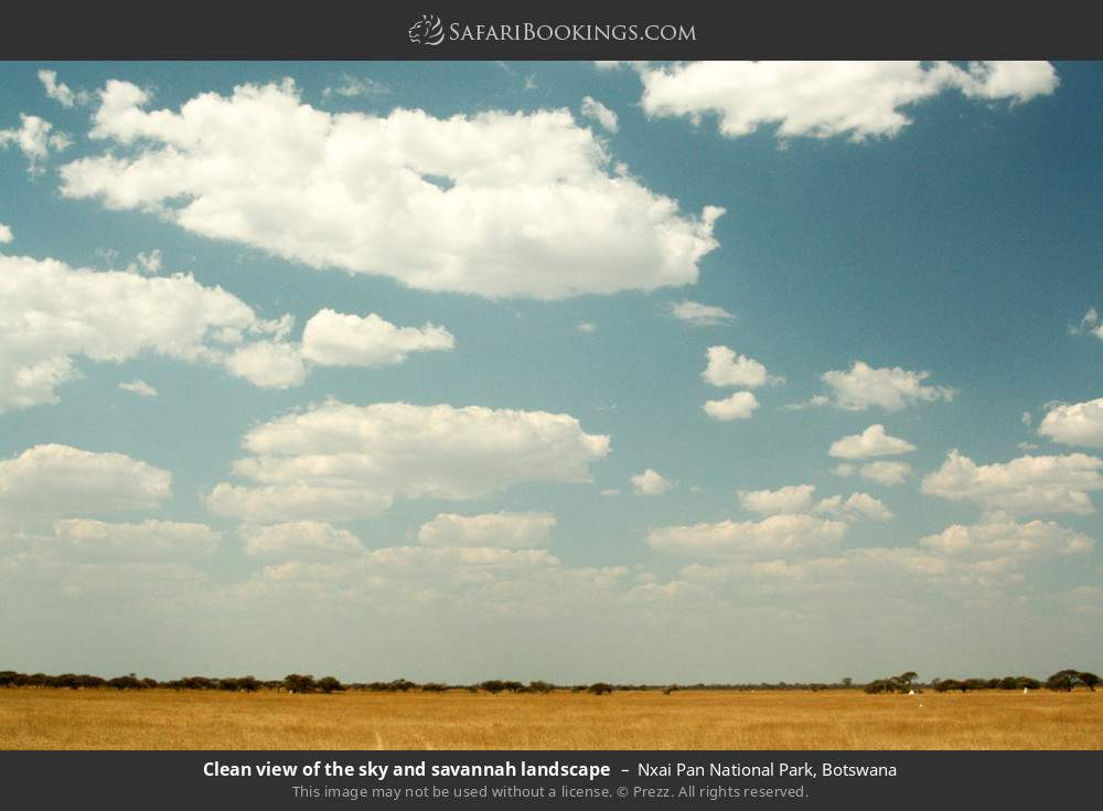 Clean view of the sky and savanna landscape in Nxai Pan National Park, Botswana