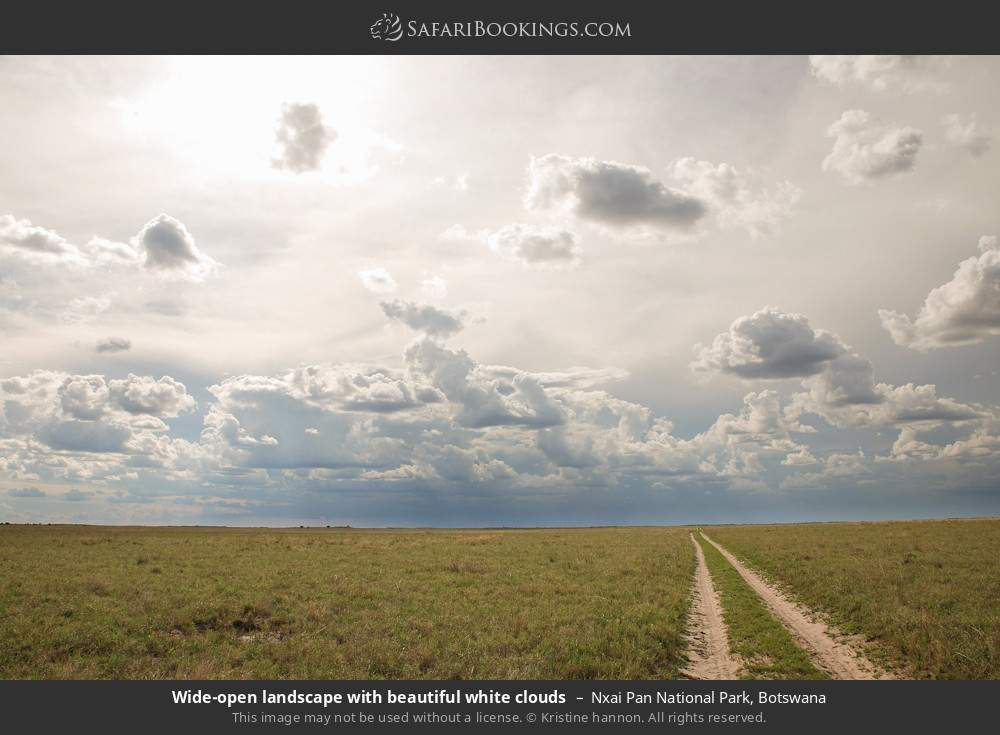 Wide open landscape with beautiful white clouds in Nxai Pan National Park, Botswana