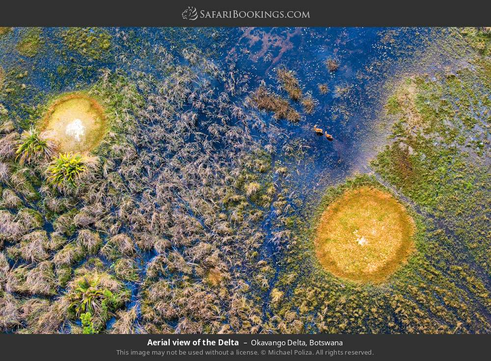 Aerial view of the delta in Okavango Delta, Botswana