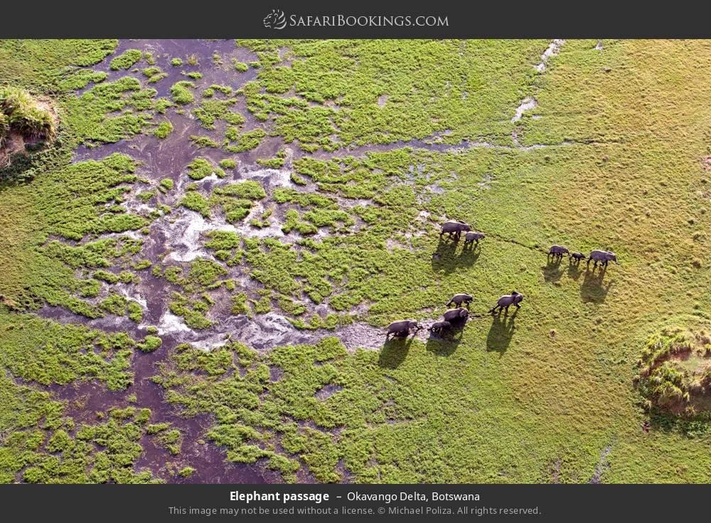 Elephant passage in Okavango Delta, Botswana